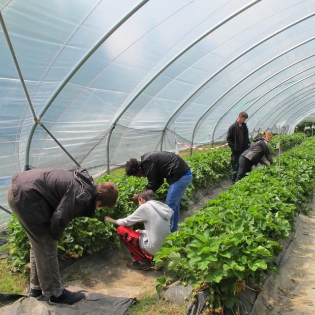 Beruf Gärtner - der Zukunft gewachsen_04